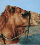 Study of a Camel head